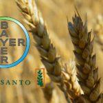 Monsterdeal Bayer-Monsanto: de risico's van een omstreden overname