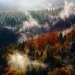 Podcast – Bijna een miljard euro en het leger moeten het uitdrogende Duitse bos redden